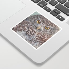 Eurasian Pygmy Owl Sticker