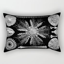 Sand Dollars (Echinidea) by Ernst Haeckel Rectangular Pillow
