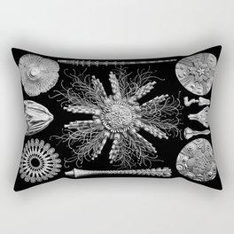 Sand Dollars (Echinidea) by Ernst Haeckel Rectangular Pillow