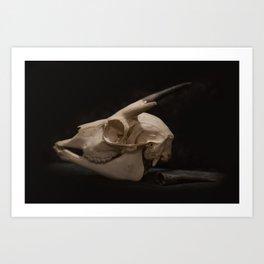 White Tail Deer Skull Art Print