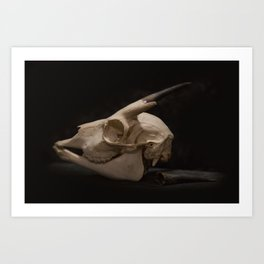 White Tail Deer Skull Art Print