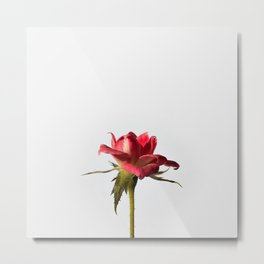 red rose #society6 #decor #buyart Metal Print