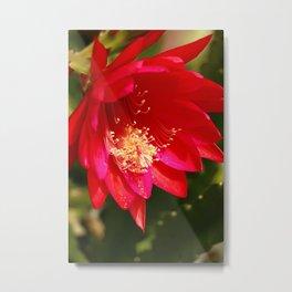 Cacti Blossom Metal Print