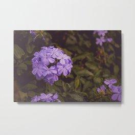 Flower Photography by Jean Vasquez Metal Print