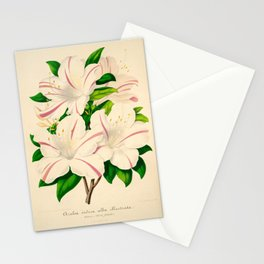 Azalea Alba Magnifica (Rhododendron indica) Vintage Botanical Floral Scientific Illustration Stationery Cards