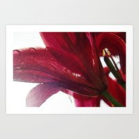 ruby Art Prints featuring Ruby by Dominique Gwerder