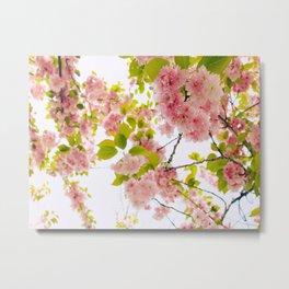 Pink Cherry Blossom Japanese Spring Beauty Metal Print