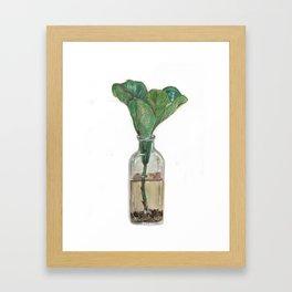 Fig Leaves Framed Art Print