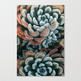 Autumn Succulent #1 Canvas Print