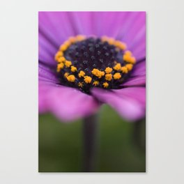 Pink flower, yellow black heart Canvas Print