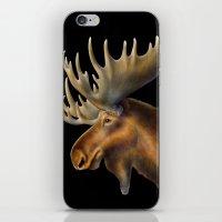 moose iPhone & iPod Skins featuring Moose by Tim Jeffs Art