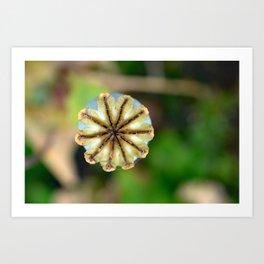 Poppy seed pod. Art Print