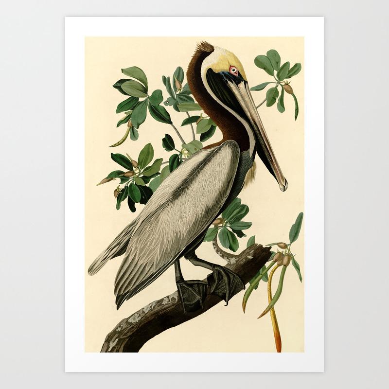 The Brown Pelican Pelecanus Canvas Wall Art Print,  Home Decor