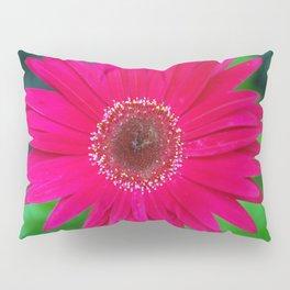 Pop of Color Pillow Sham