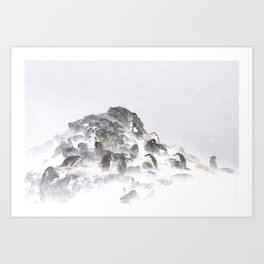 Antarctic summer Art Print
