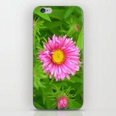 little aster iPhone & iPod Skin