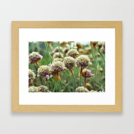 Flowers on the Irish countryside Framed Art Print