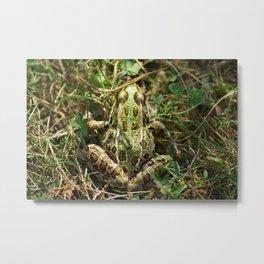 The frog Metal Print