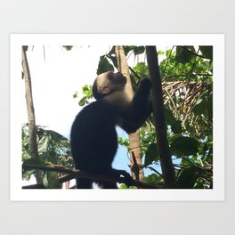 Costa Rica Monk Art Print