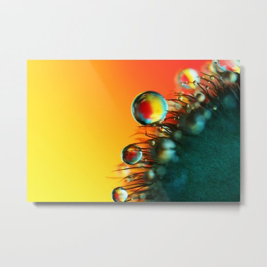 Poppy Drops Metal Print