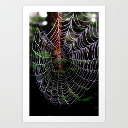 Dew Covered Web in the Catskills Art Print