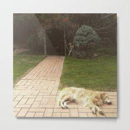 Sleeping Golden Retriever  Metal Print