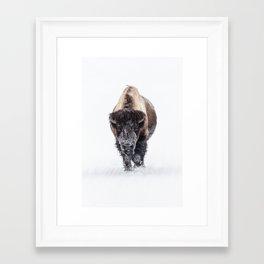 Yellowstone National Park: Lone Bull Bison Framed Art Print