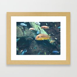 Fish 4 Framed Art Print