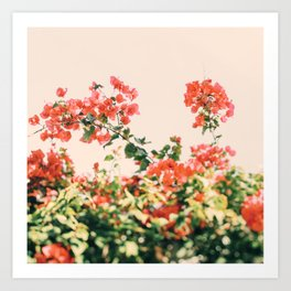 Bougainvillea Dream Art Print