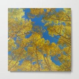 Aspen Trees Against Sky Metal Print