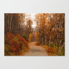 Winding country road in a fall forest Canvas Print