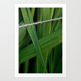bound leaves Art Print
