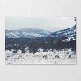 Elk herd in the Rockies Canvas Print