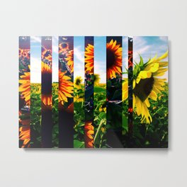 Sunflowers in Maryland Metal Print