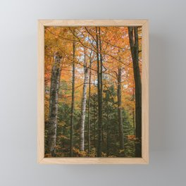 Colours of Autumn at Mono Cliffs | #1 Framed Mini Art Print