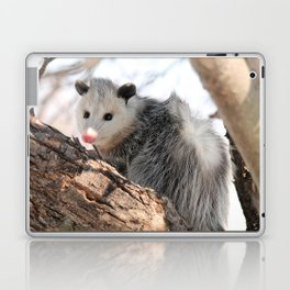 North American Opossum in Winter Laptop & iPad Skin