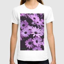 Black & Lilac Color Purple Daisies T-shirt