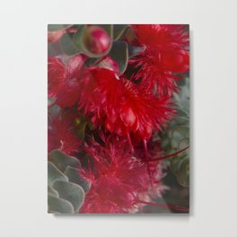 Scarlet Featherflower Metal Print