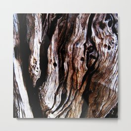 Ancient olive tree wood close-up Metal Print