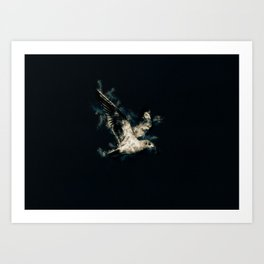 Flying Bird. Art Print