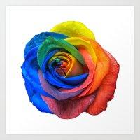 Multicolour Rose on White Art Print