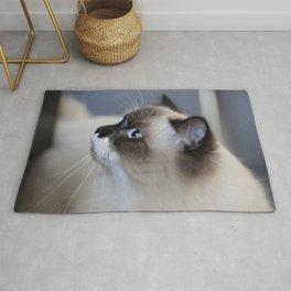 Ragdoll Cat Rug
