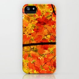 Sugar Maple Leaves in the Fall Light iPhone Case