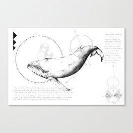 Geometry of a Blue Whale Canvas Print