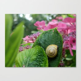 marcel the shell Canvas Print
