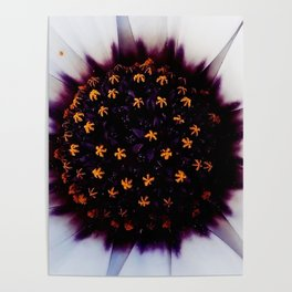 just a flower detail Poster