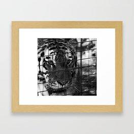 Caged Rage Framed Art Print
