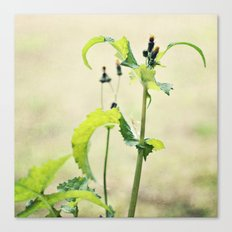 growing wild Canvas Print