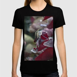 Hummingbird Hiding in Red Bud Tree T-shirt