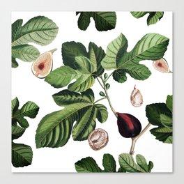 Figs White Canvas Print